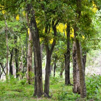 Bahadurpur