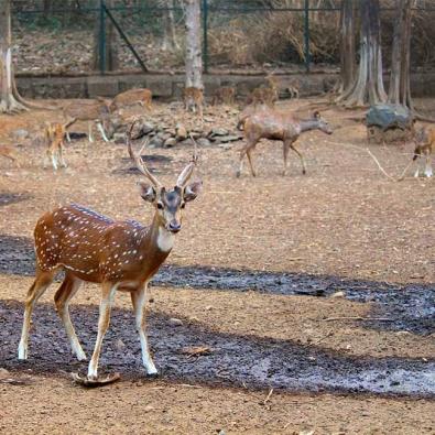 Bonpukuria Deer Park