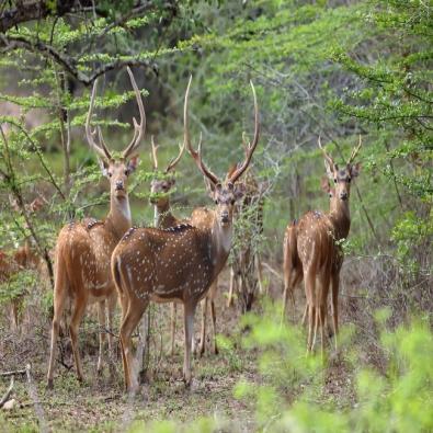 Gendekatte Wildlife Sanctuary